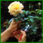 Gartengeräte regelmäßig schärfen
