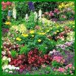 Schmetterlingsgarten, eine Oase für Schmetterlinge