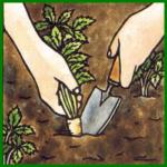Gemüseanbau mit ausgefallenen Gemüsesorten