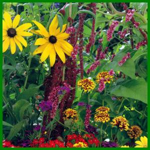 Blumen aus Blumensamen selber ziehen