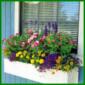 Bunter sommerlicher Blumenkasten in Regenbogenfarben