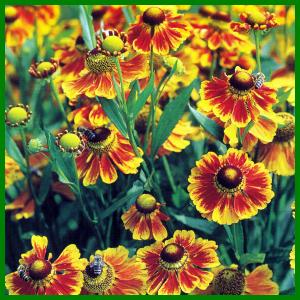 pflegeleichte balkonpflanzen sommer