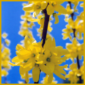 Steckholz-Vermehrung, Vermehrung mit Steckhölzern