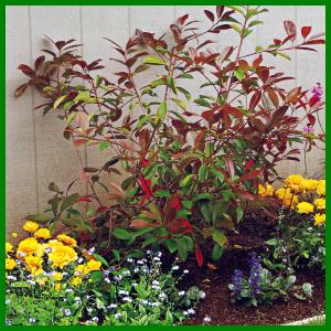 Verpflanzen Oder Umsetzen Von Strauchern