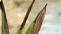 Trockenschäden 2