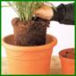 Umtopfen von Zimmerpflanzen und Einpflanzen