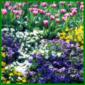 Beet mit intensiven Farbmustern und Blumen