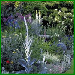Vogeltränke umrahmt von Schnittblumen im eigenen Garten