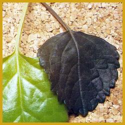 Wärmeschäden, KäIteschäden, Zimmerpflanzen