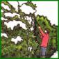 Winterschutz für Pflanzen, Sträucher, Hecken und Bäume