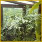 Wintergarten, geeignete Pflanzen und Pflanzenpflege