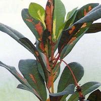 Wintergarten, Pflanzen, Pflanzenpflege
