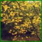 Duftsträucher, die auch im Winter blühen