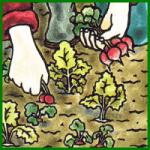 Wurzelgemüse aus dem eigenen Gemüsegarten