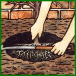 Wurzeln und Wurzelballen im Garten einpflanzen