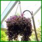 Blumenampel mit Zimmerpflanzen bepflanzen