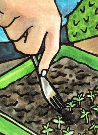 Anzucht von Beetpflanzen