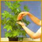 Arbeitskalender für Zimmerpflanzen, für das ganze Jahr