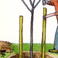 Baumstützen