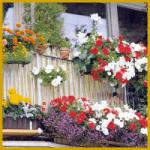 Balkonkästen und andere Pflanzengefäße