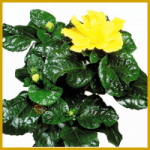 Bekannte Schädlinge bei Zimmerpflanzen, Bekämpfung