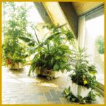 Bewässerungssysteme versorgen Ihre Pflanzen selbst