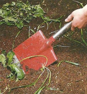 Von Zierrasen und Blumenwiese