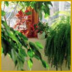 Zimmerpflanzen biologisch pflegen und halten