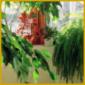 Zimmerpflanzen biologisch natürlich pflegen und halten