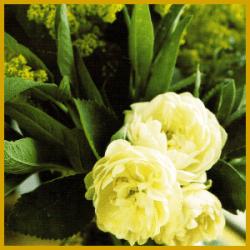 Blumenarrangements, geschmackvoll arrangiert