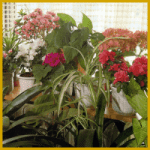 Nostalgische Blumen auf dem Fensterbrett