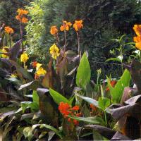Auch in Rabatten macht sich das Blumenrohr prächtig