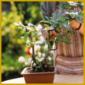 Bonsaipflege – ist etwas anspruchsvoll und erfordert viel Geduld