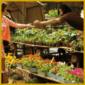 Geeignete Zimmerpflanzen Einkaufen, Pflanzen aussuchen