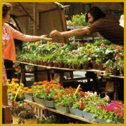 gartenschlumpf geeignete zimmerpflanzen einkaufen pflanzen aussuchen. Black Bedroom Furniture Sets. Home Design Ideas