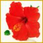 Exotische Blumen bei Ihnen zu Hause im Zimmer, viele Züchtungen