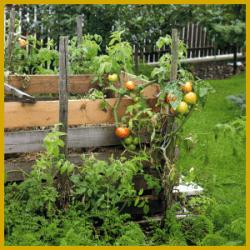 Kompost als Dünger für Ihren Garten verwenden