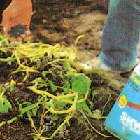 Kompost als Dünger