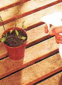 Beetpflanzen