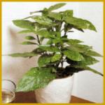 Goldorange ist eine einfache Pflanze