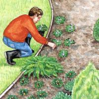 Immergrüner Garten