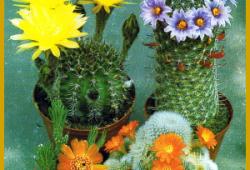 Kakteen zum Blühen bringen