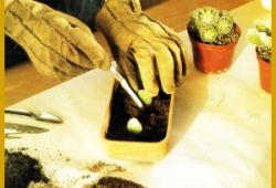 Vermehrung von Kakteen, Vermehrungsmethoden