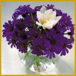 Kleine Blumen und kleine Sträuße