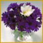 Kleine Blumen und zierliche schöne Blumensträuße