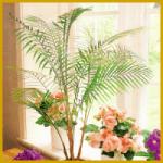 Kokospälmchen, die kleinste bekannte Palme