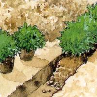 Aromatische Kräuter