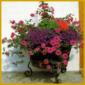 Kübelpflanzen richtig pflegen, richtige Erde, richtiges Pflanzen