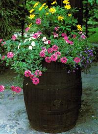 Kübelpflanzen richtig pflegen