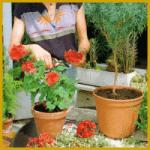 Kübelpflanzen überwintern und BaIkonpflanzen
